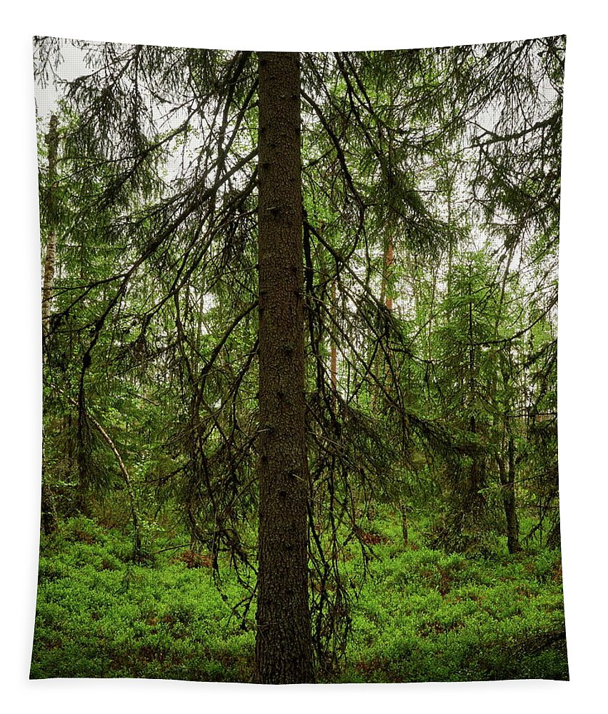 Finland Tapestry featuring the photograph The Shadow Of The Spruce by Jouko Lehto
