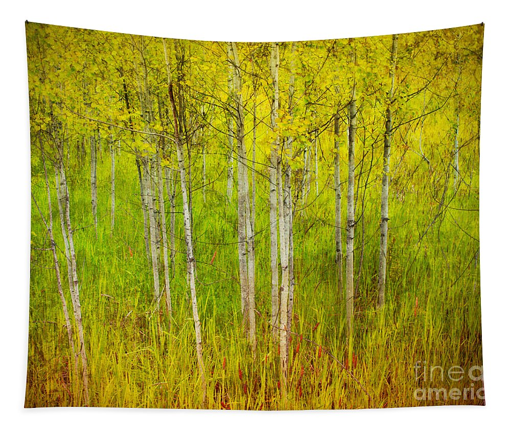 Forest Tapestry featuring the photograph The Small Forest by Tara Turner