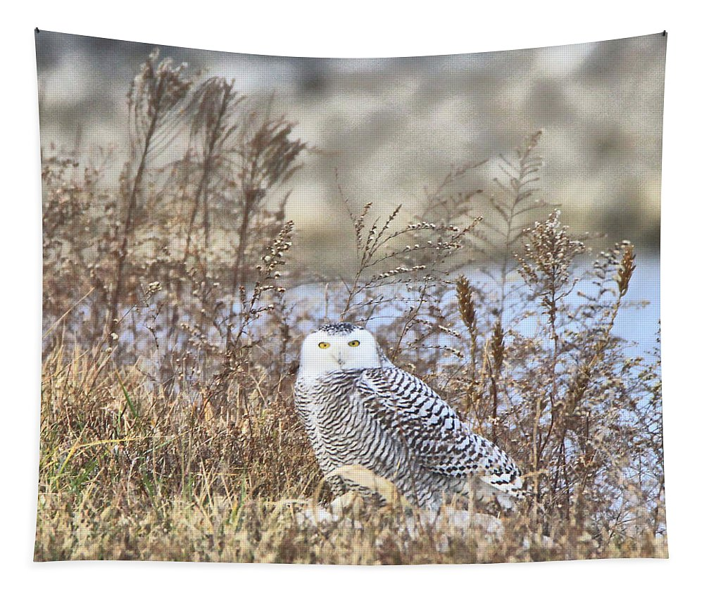 The Snowy Owl Tapestry featuring the photograph The Snowy Owl by Dan Sproul