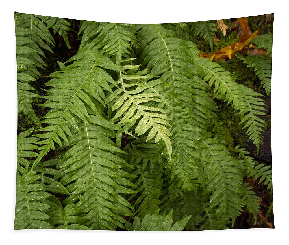 Dramatic Tapestry featuring the photograph The Standout Fern by Jean Noren