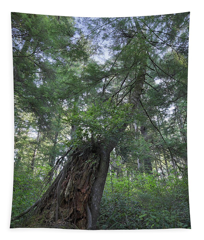 Trees Tapestry featuring the photograph The Strength Of Nature by Masako Metz