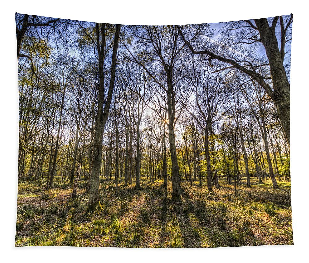 Forest Tapestry featuring the photograph The Sunset Forest by David Pyatt