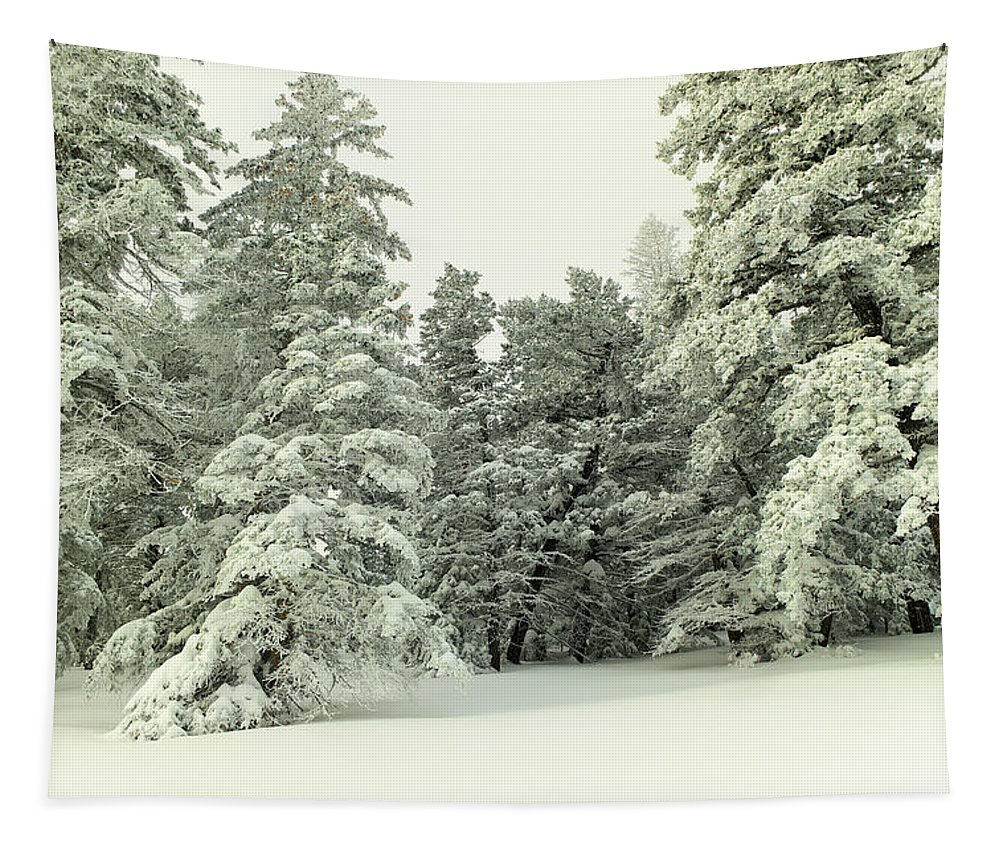 Forest Tapestry featuring the photograph The Sweep Of Snow by Jeff Swan
