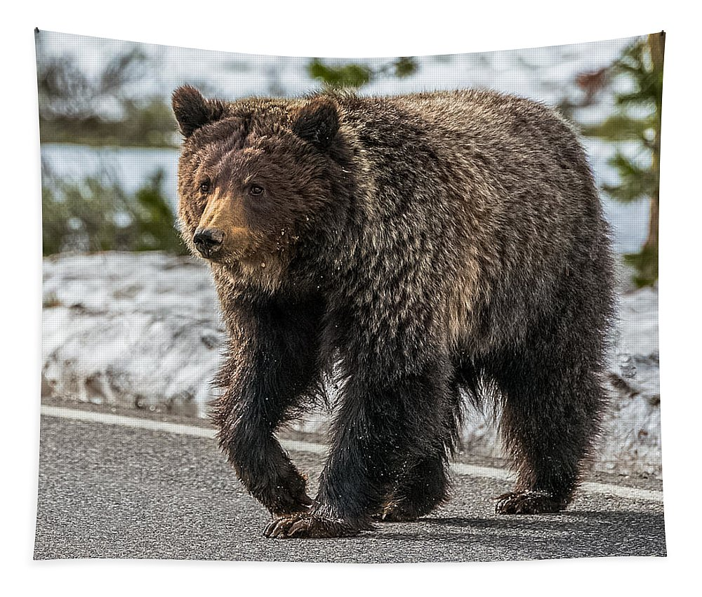 Grizzly Bear Tapestry featuring the photograph The Sweet Chocolate Lady by Yeates Photography