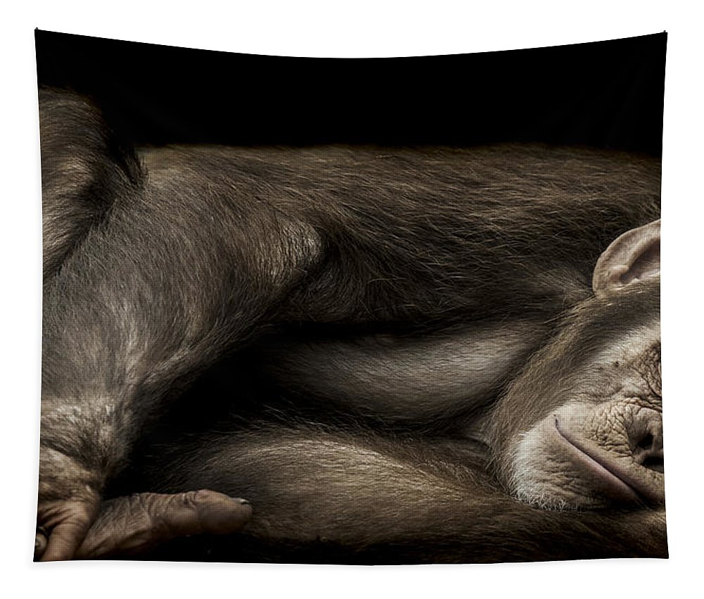 Chimpanzee Tapestry featuring the photograph The Teenager by Paul Neville