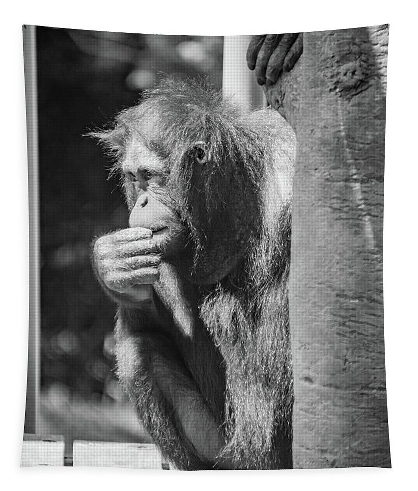 Orangutan Tapestry featuring the photograph The Thinker by Pamela Williams