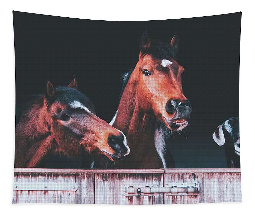 Horses Tapestry featuring the photograph The Three Amigos by Pixabay