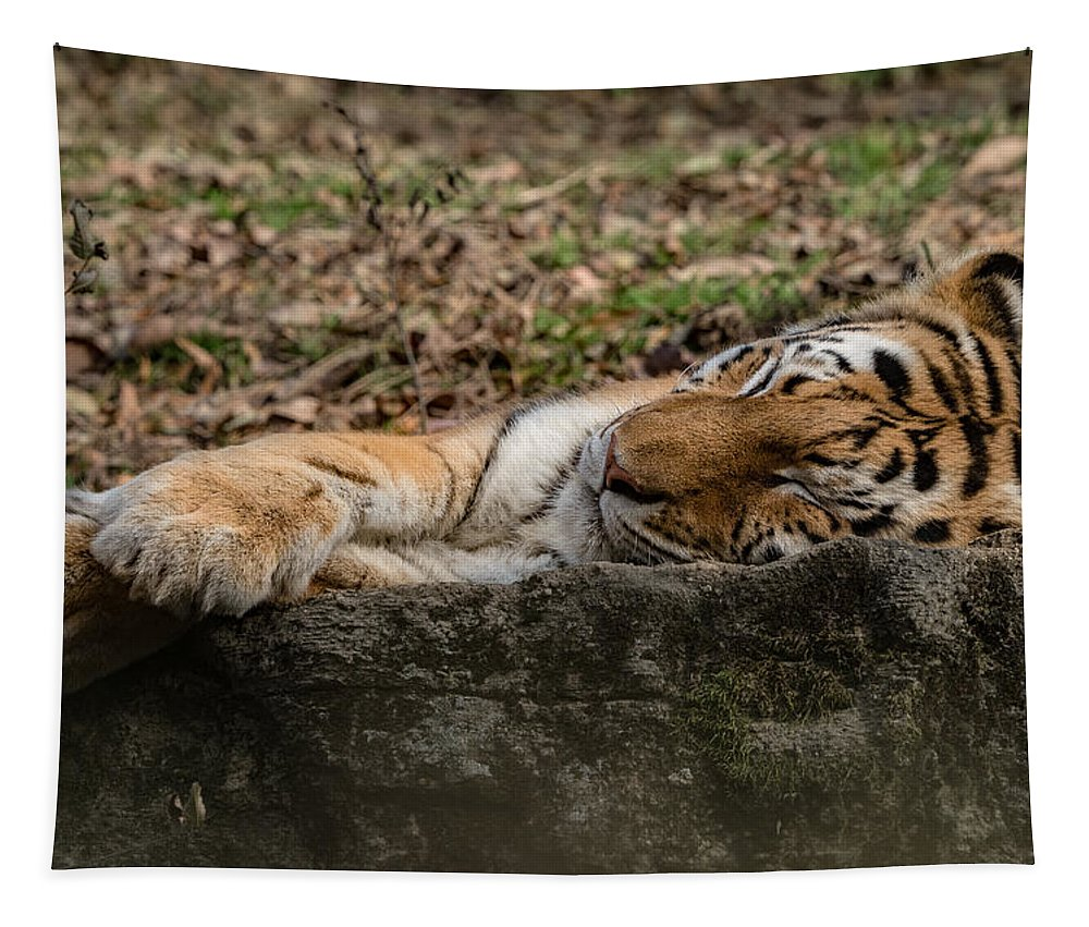 Tiger Tapestry featuring the photograph The Tiger's Rock by Dave Kinsey