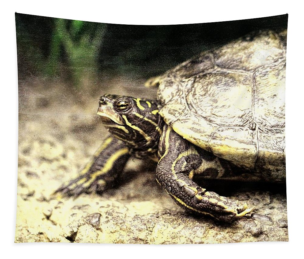 The Turtle Tapestry featuring the photograph The Turtle by Dan Sproul