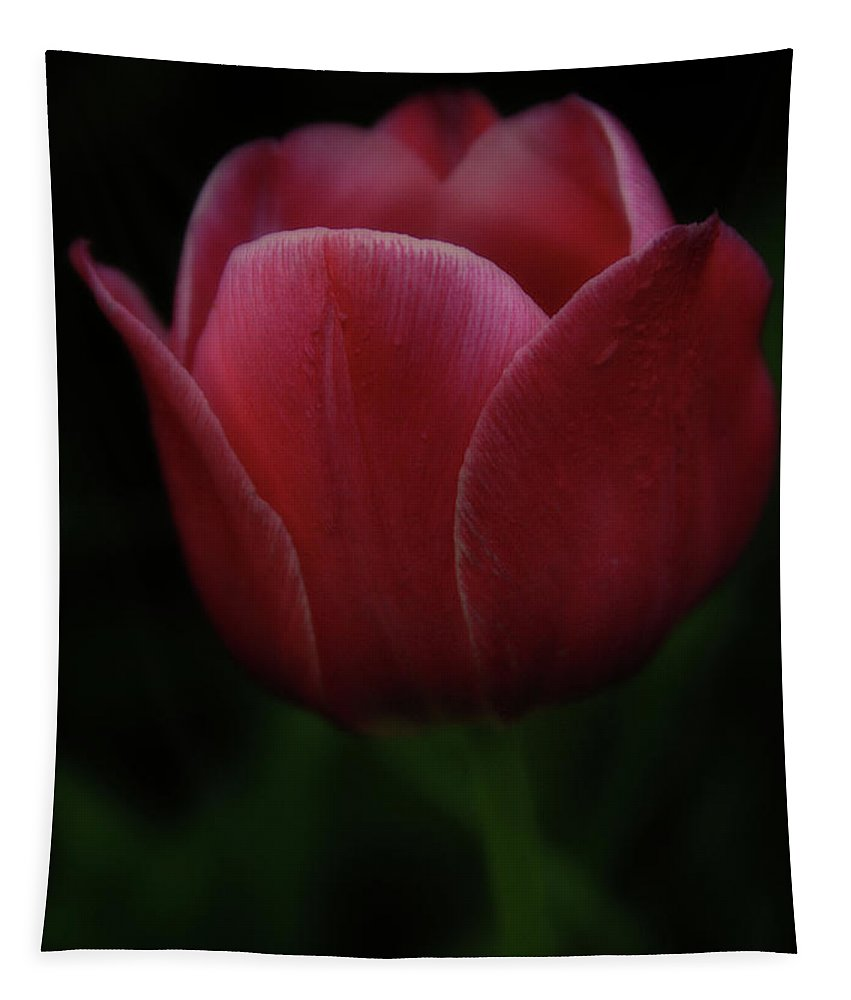 Tulip Tapestry featuring the photograph The Wild Tulip by Brian Gustafson