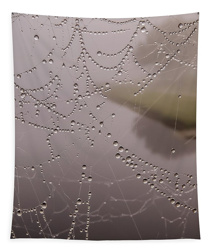 Rain Drops Tapestry featuring the photograph The World Through A Web by Zina Stromberg