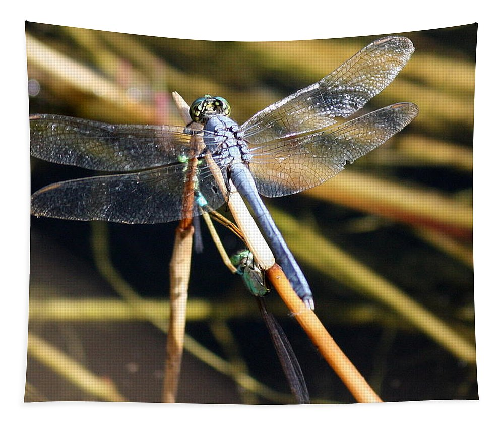Dragonflies Tapestry featuring the photograph Three Dragonflies On One Reed by Carol Groenen