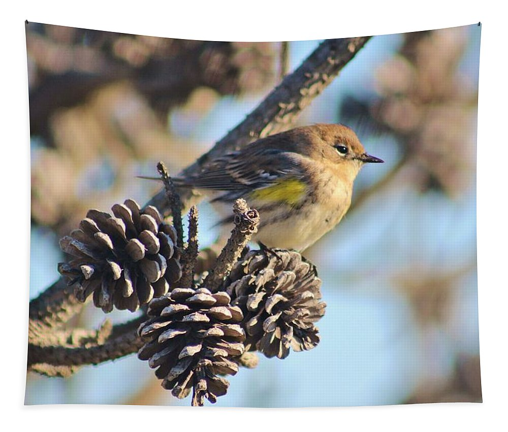 Karen Silvestri Tapestry featuring the photograph Three Pine Cones And A Little Bird by Karen Silvestri