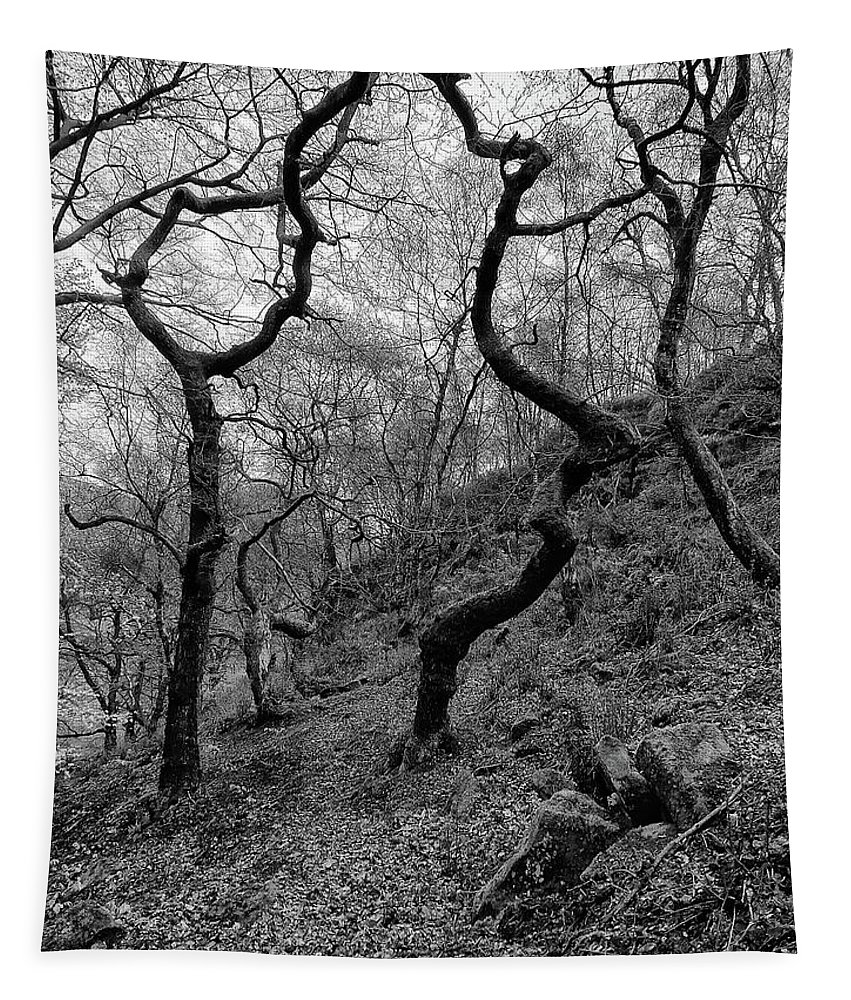 Trees Tapestry featuring the photograph Three Trees by Philip Openshaw