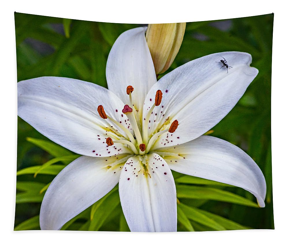 Flower Tapestry featuring the photograph Ticklish? by Steve Harrington