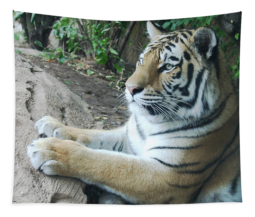Tiger Photographs Tapestry featuring the photograph Tiger Portrait by Linda Sannuti