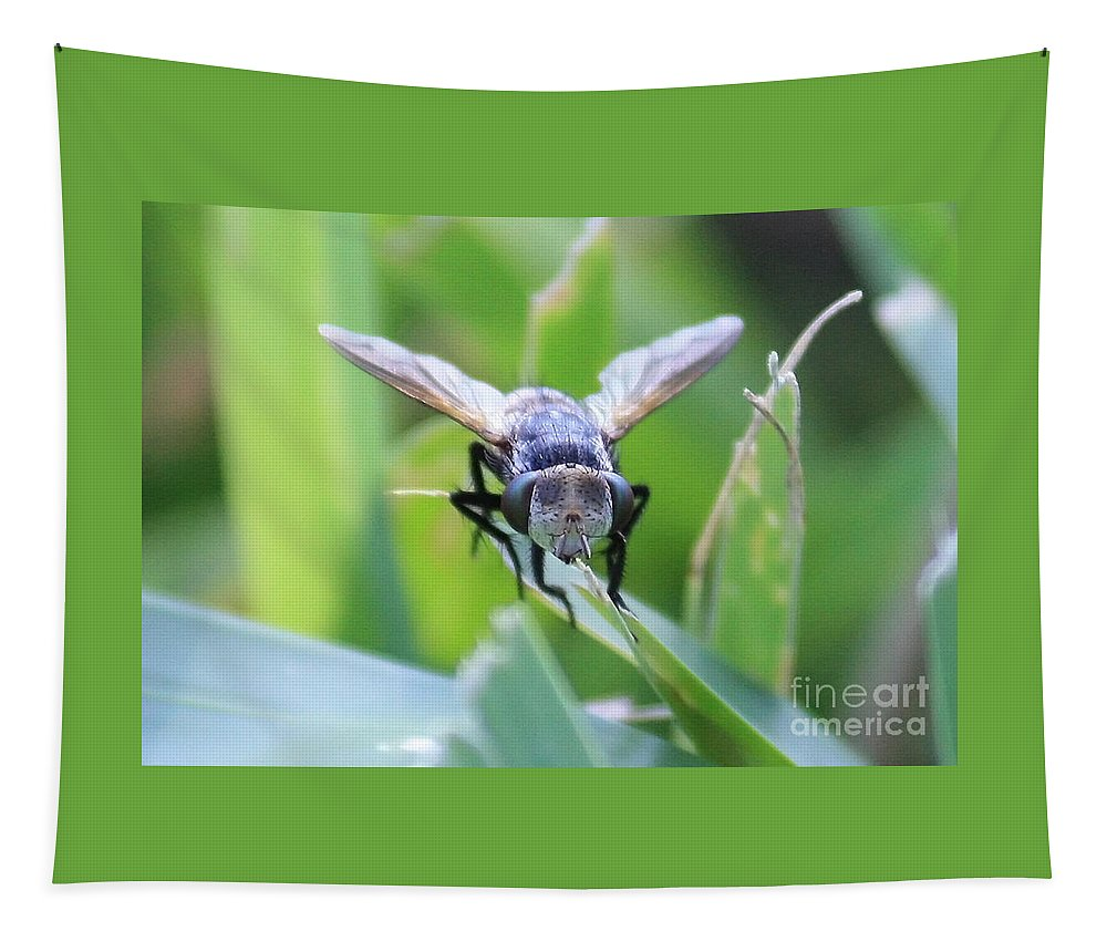 Fly Tapestry featuring the photograph Tiny Fly by Carol Groenen