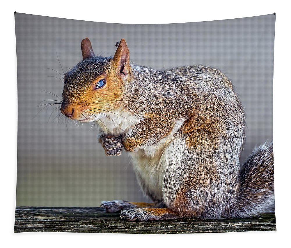 2d Tapestry featuring the photograph Tired Squirrel And Fly by Brian Wallace