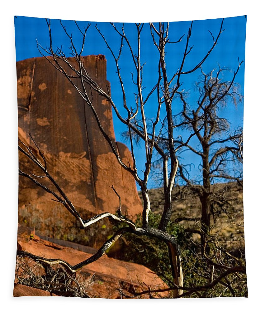 Tree Tapestry featuring the photograph To Be Green Again by Chris Brannen