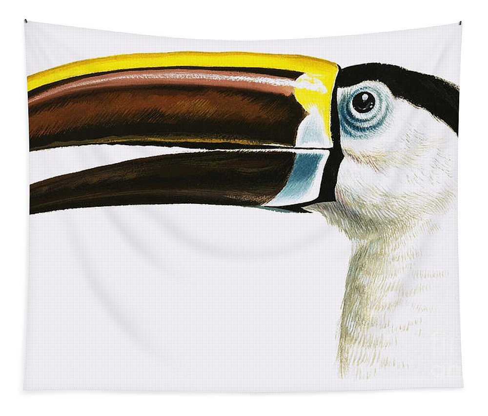 Toucan Tapestry featuring the painting Toucan by English School