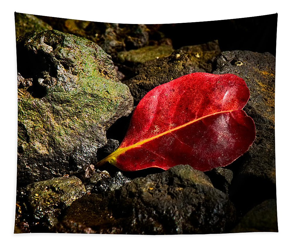 Nature Tapestry featuring the photograph Touch Of Red by Christopher Holmes