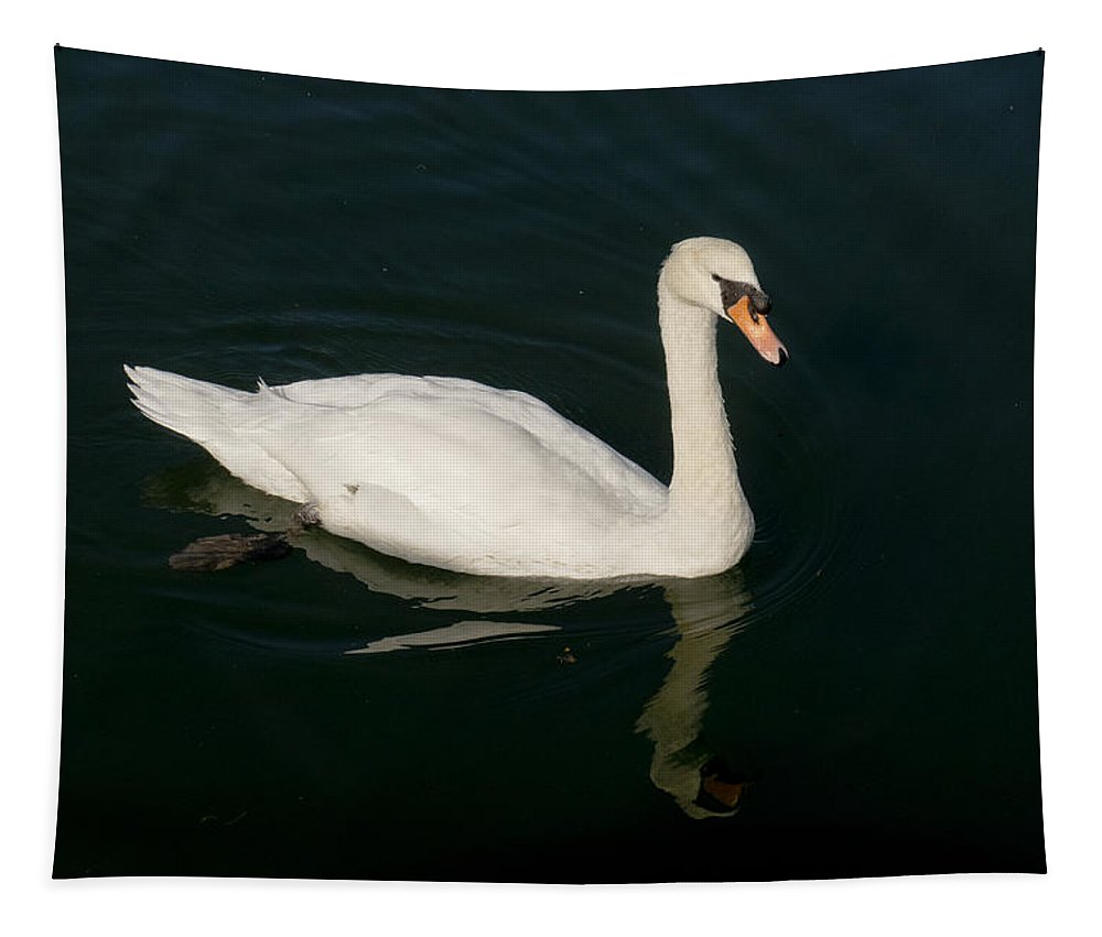 Swan Tapestry featuring the photograph Tour De Swan. Un. by Elena Perelman