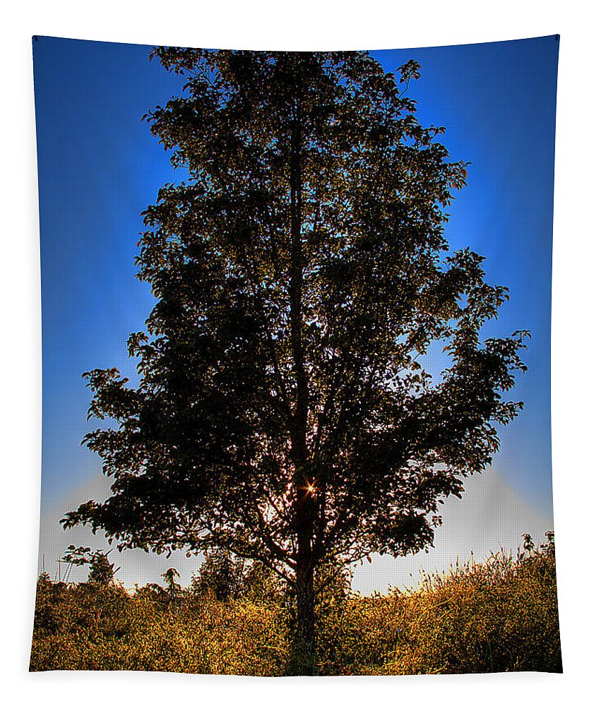 Tree Tapestry featuring the photograph Tree Silhouette by David Patterson