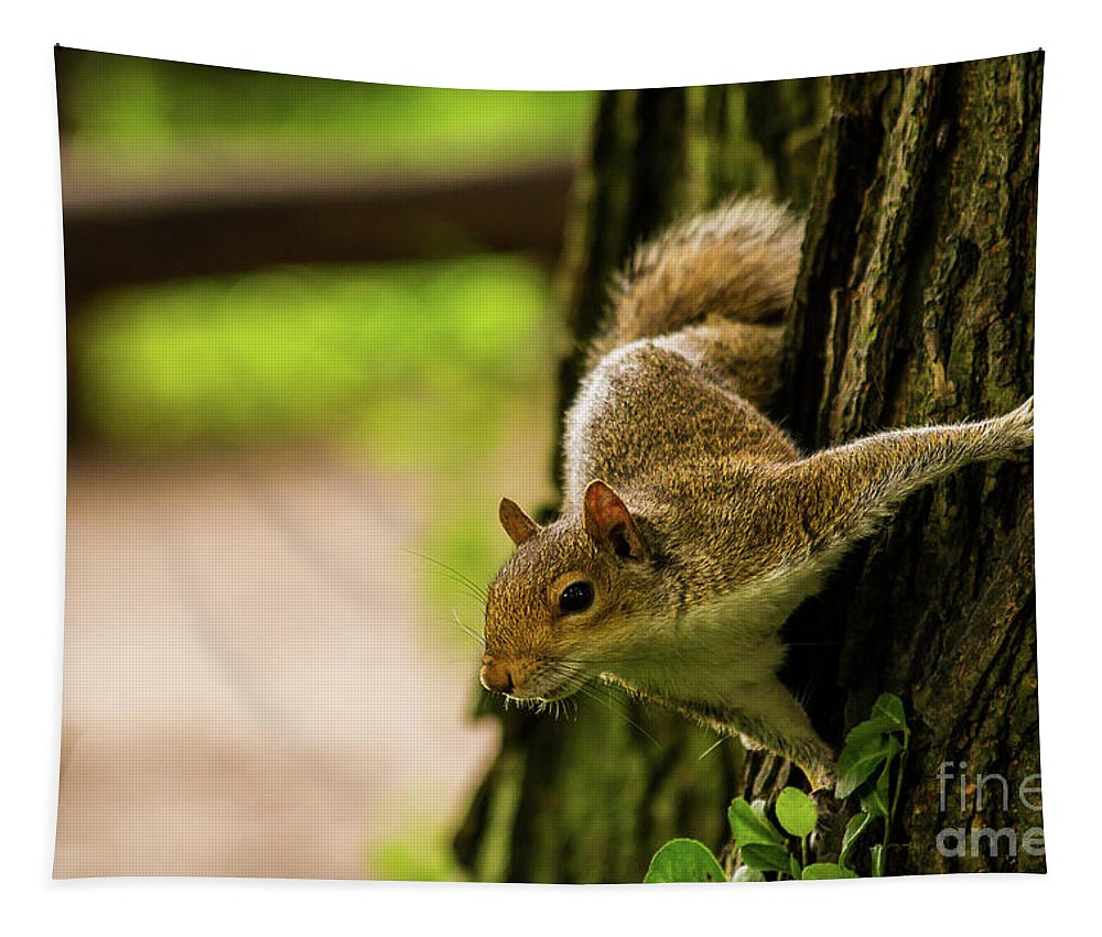 Nature Tapestry featuring the photograph Tree Squirrel by Mirko Chianucci