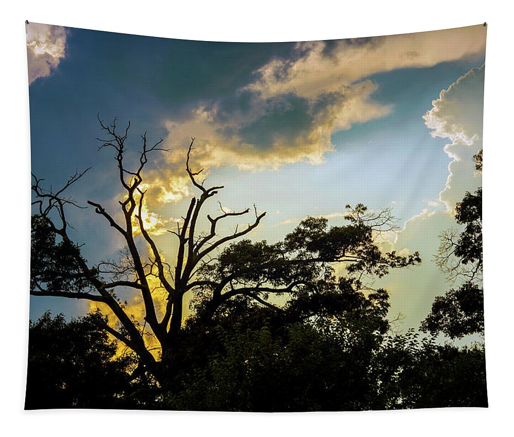 2d Tapestry featuring the photograph Treeline Silhouette by Brian Wallace