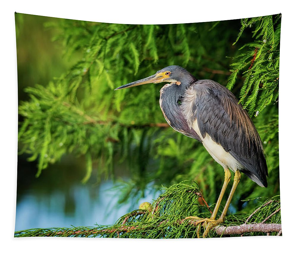 Tri-colored Heron Tapestry featuring the photograph Tri-colored Heron At Sunset by Saija Lehtonen