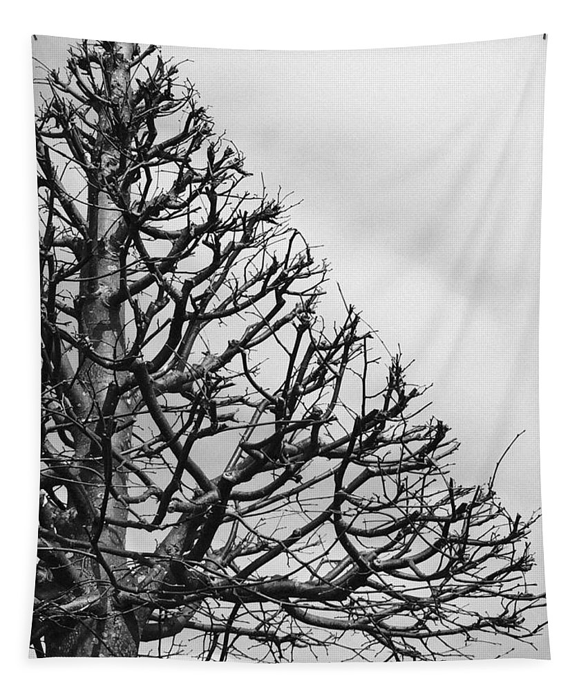 Tree Tapestry featuring the photograph Triangle Tree by Linda Woods