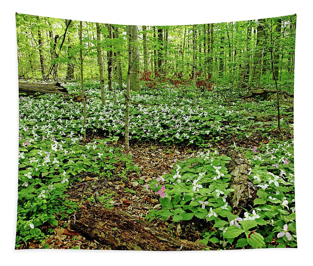 Trilliums Tapestry featuring the photograph Trillium Woods I by Debbie Oppermann