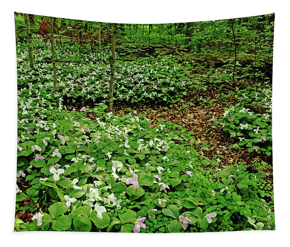 Trilliums Tapestry featuring the photograph Trillium Woods Iv by Debbie Oppermann