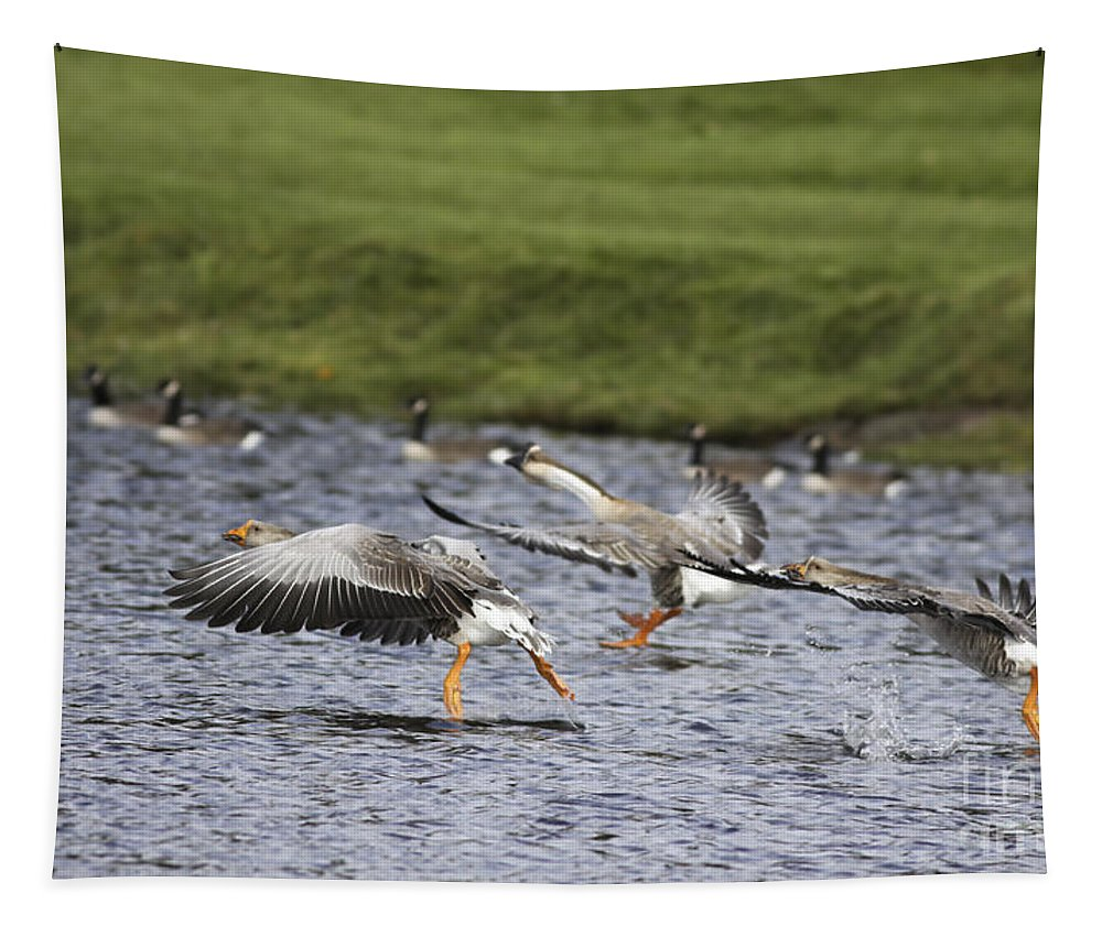 Geese Tapestry featuring the photograph Triple Lift Off by Deborah Benoit