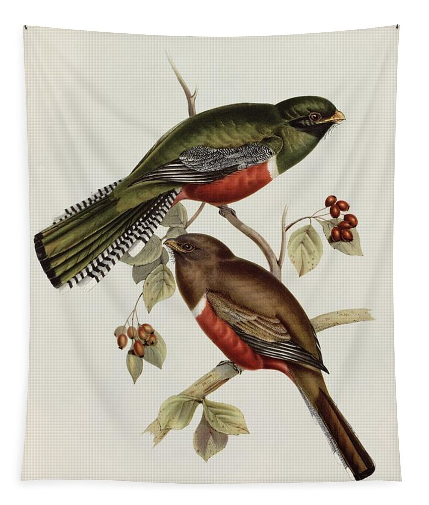 Trogon Tapestry featuring the painting Trogon Collaris by John Gould