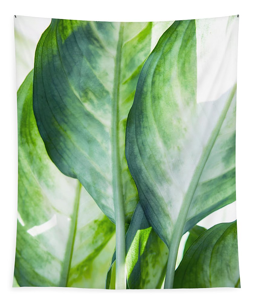 Summer Tapestry featuring the painting Tropic Green Abstract by Mark Ashkenazi