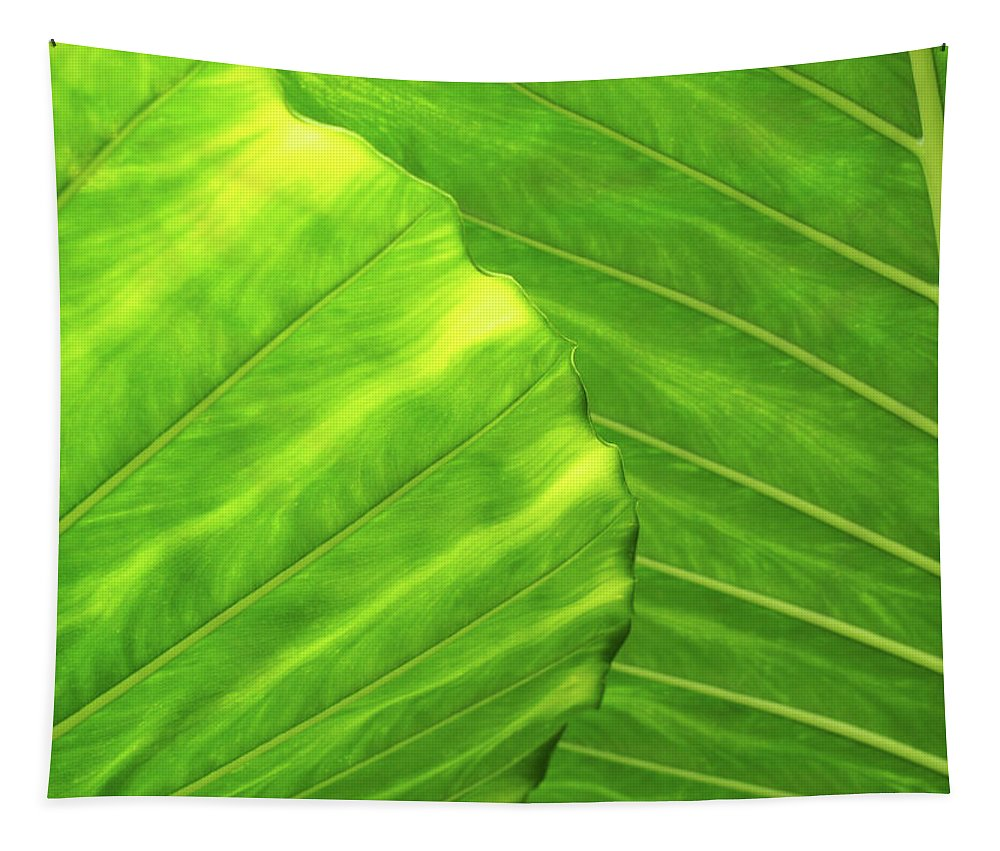 Leaf Tapestry featuring the photograph Tropical Vibrant Green by Philip Openshaw