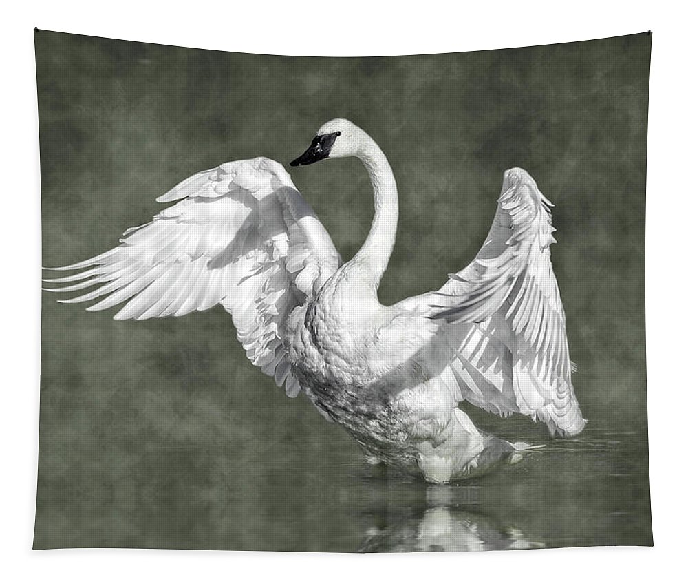 Trumpeter Swan In The Fog Tapestry featuring the photograph Trumpeter Swan In The Fog by Wes and Dotty Weber