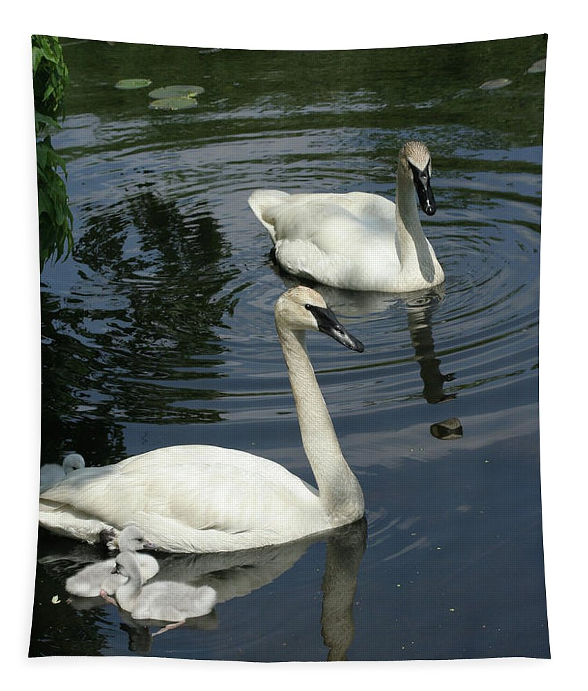 Trumpeter Swans Tapestry featuring the photograph Trumpeter Swans by Judy Whitton