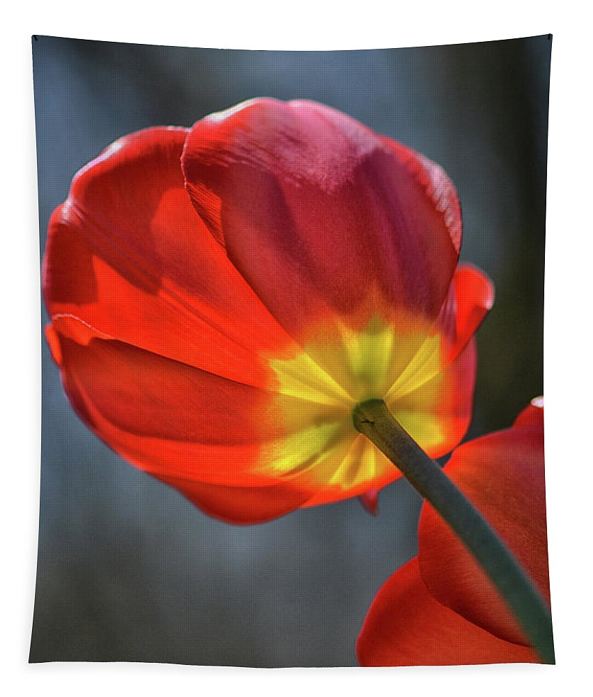 Tulip Tapestry featuring the photograph Tulip From Below by Barbara Treaster