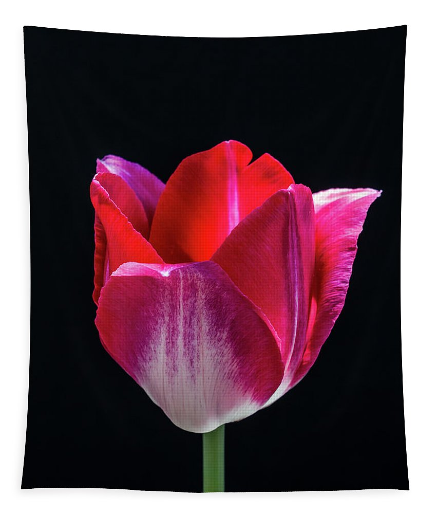 Still Life Tapestry featuring the photograph Tulip In Profile. by Robert Alsop