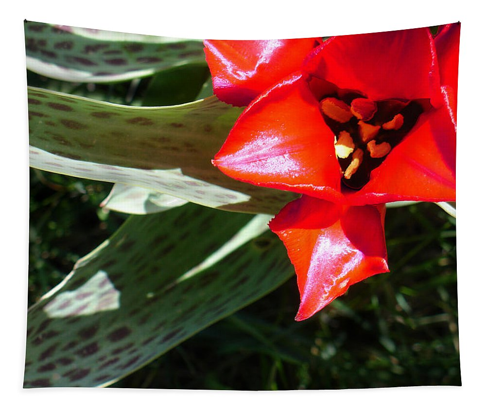 Tulip Tapestry featuring the photograph Tulip by Steve Karol