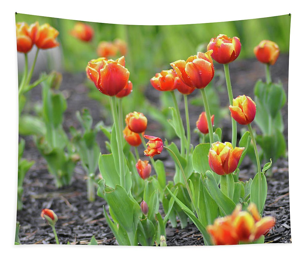 Tulips Tapestry featuring the photograph Tulips In The Springtime by Bill Cannon