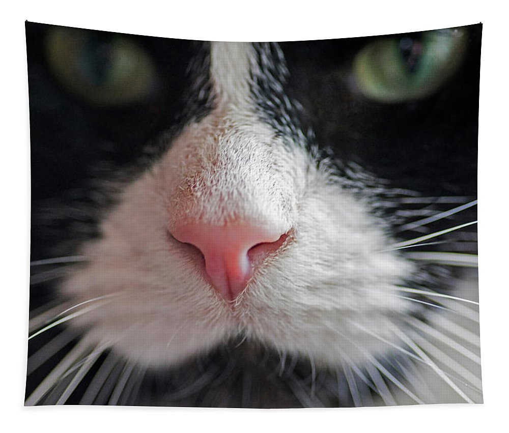Tuxedo Tapestry featuring the photograph Tuxedo Cat Whiskers And Pink Nose by Toby McGuire