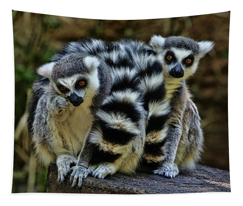 Ring-tailed Lemur Tapestry featuring the photograph Twin Lemurs by Judy Vincent