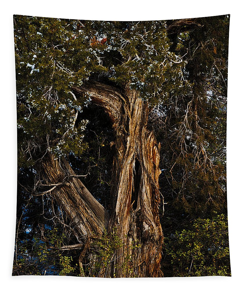 Rocky Mount Juniper Tapestry featuring the photograph Twisted Juniper by Christopher Holmes