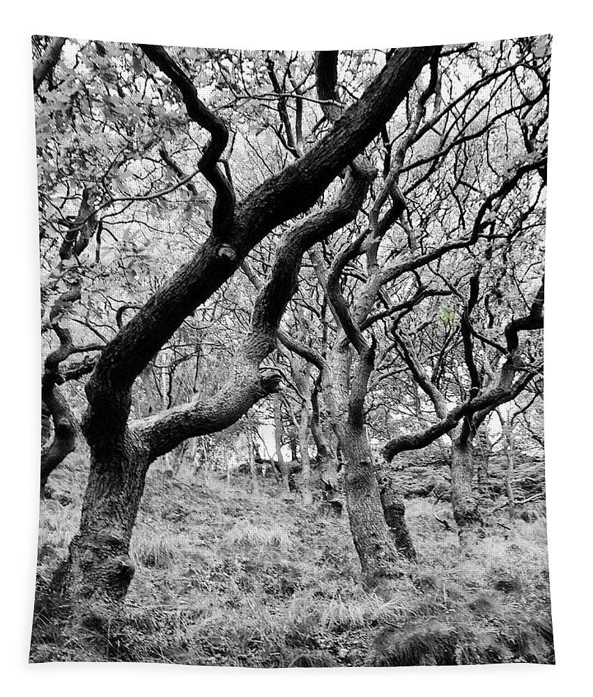 Twisted Tapestry featuring the photograph Twisted Woodland by Philip Openshaw