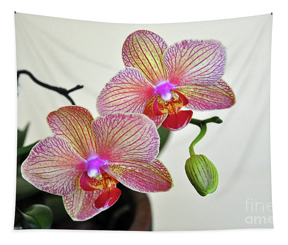 Orchid Tapestry featuring the photograph Two Blooms For You by Davids Digits