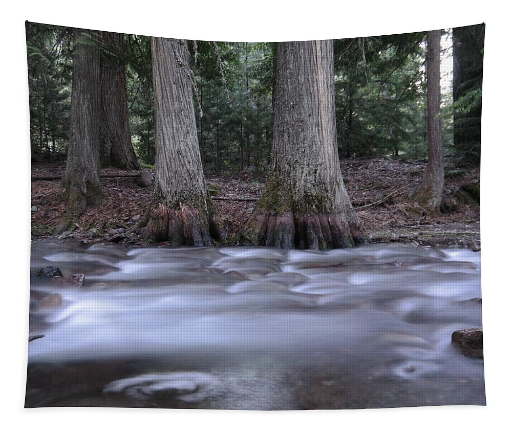 Water Tapestry featuring the photograph Two Ceders Next To A Mountain Stream by Jeff Swan