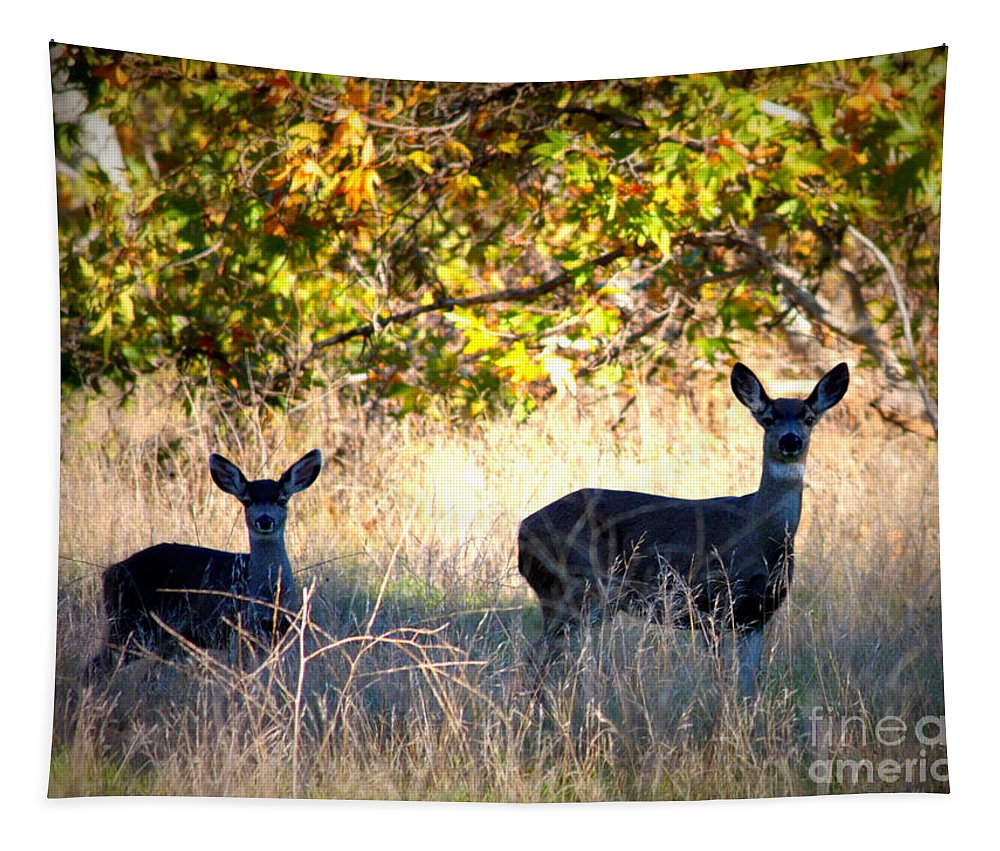 Animal Tapestry featuring the photograph Two Deer In Autumn Meadow by Carol Groenen